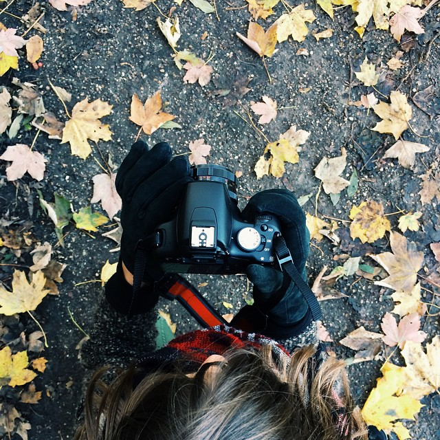 Autumn with my blackbird