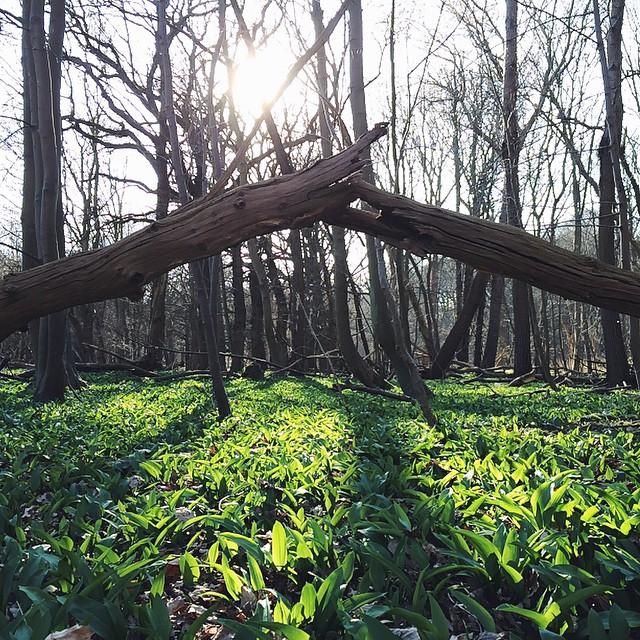 In the woods #abbezee